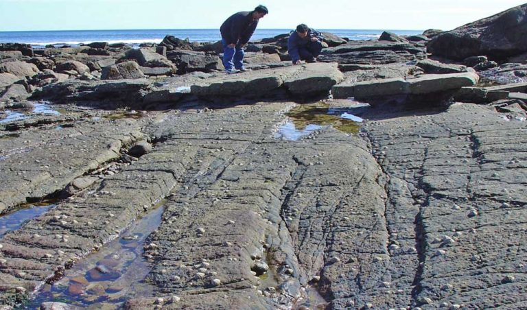 Outcrop photo of small-scale fault relays in Carboniferous limestone-shale sequence, Lamberton, SE Scotland.
